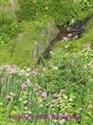 Picture of Le Jardin Des Alpes 15ml LightBringer Essence